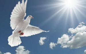 white-dove-photo-top-hd-wallpaper-for-desktop-wide-free
